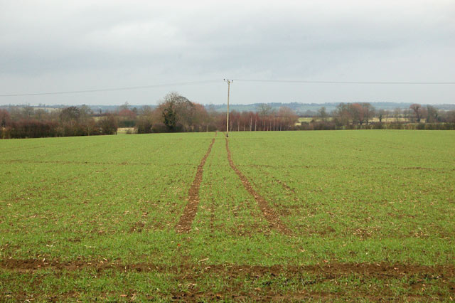 Tramlines through young crops south of Broadwell