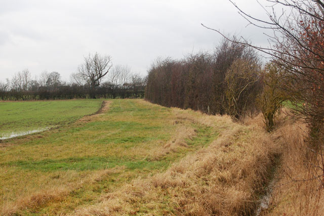 Field headland and ditch south of Broadwell