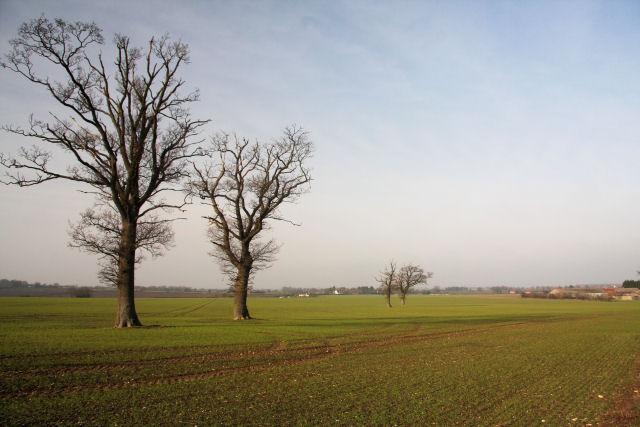 Trees near Fasbourn Hall
