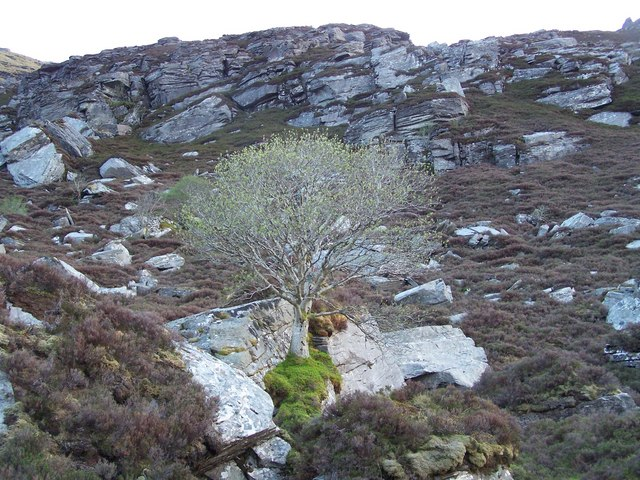 Precariously growing tree in rock cleft, above Loch Coire na Saidhe Duibhe on NE flank of Ben Hee.