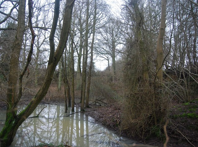 Pond by the bridleway