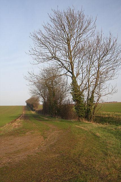 Farm track near Hitcham