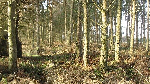 Strip wood, Brockholes
