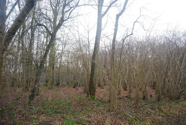 Woodland by the bridleway from Wat Stock