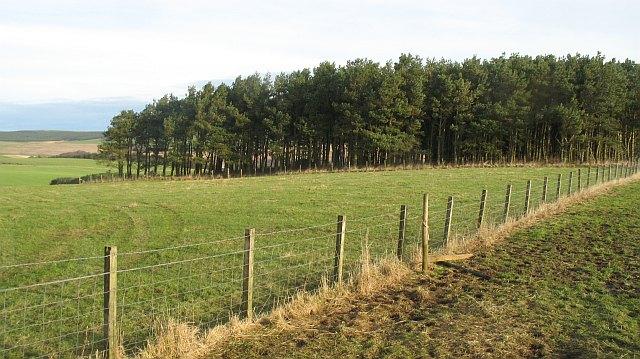 Woodland, Brockholes