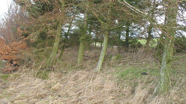 Strip wood, Drakemyre