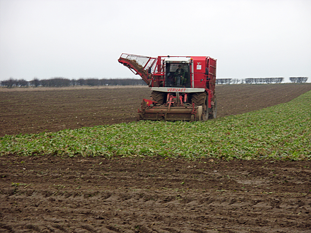 Beet Harvesting on Horkstow Wolds
