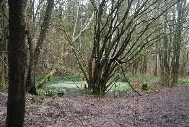 Pond, The Slips