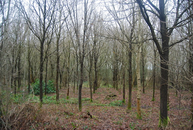 An area of young trees, The Slips