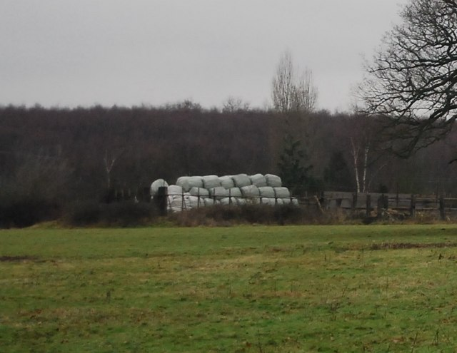 Wrapped up hay bales, Hill Hoath Farm