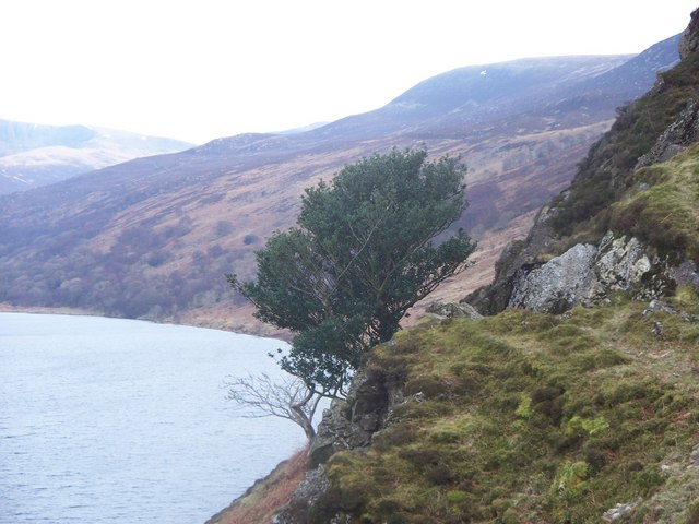 Lone tree on Anglers Crag