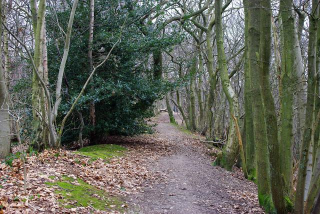 Path along crest, Tilburstow Hill (2)