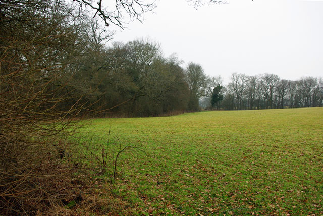 Edge of part of Outwood Common