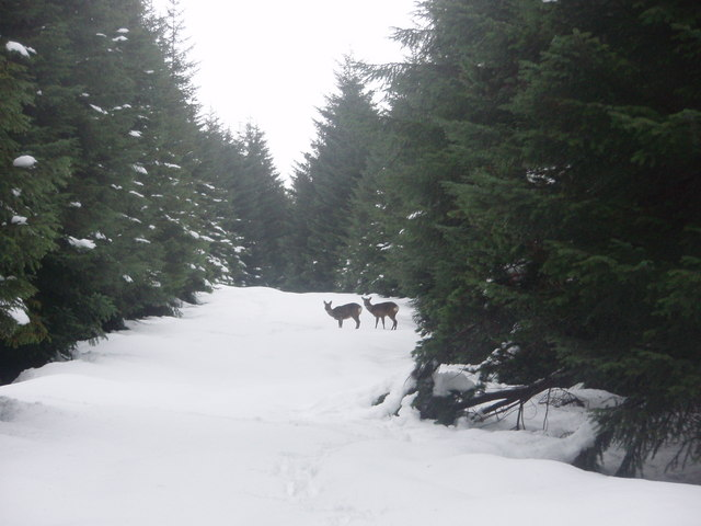 Roe Deer on the Kilbo Path
