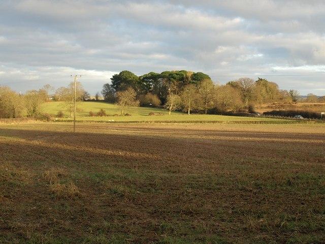 Field beside Jurston Lane