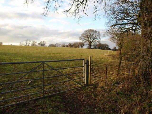 Field by Jurston Lane