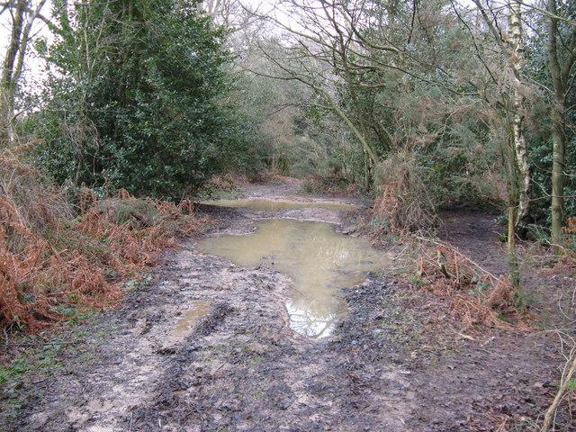 Bridleway through Wet Wood