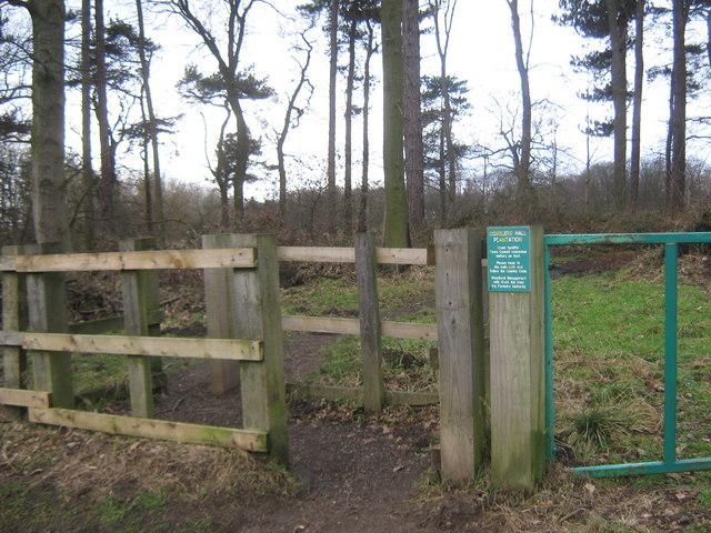 Woodland footpath Newton Aycliffe