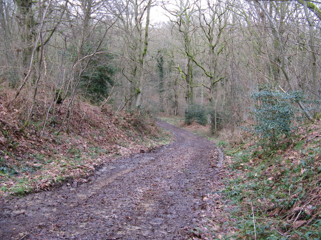 Bridleway descent in Frith Wood