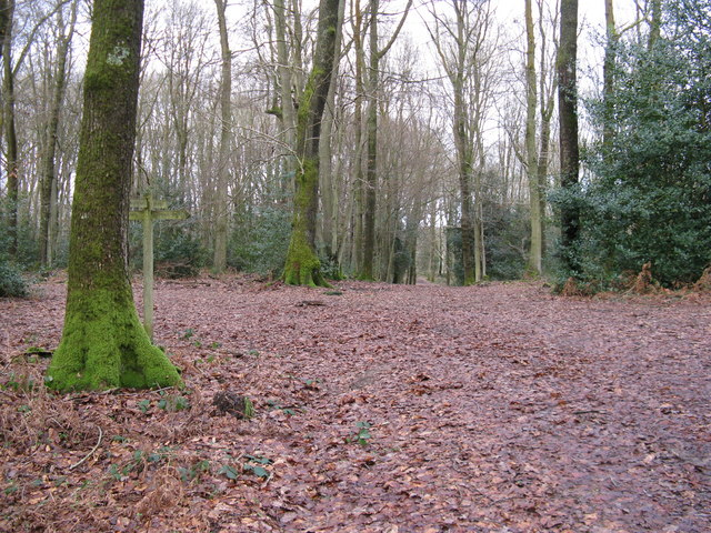 Footpath crossroads in Frith Woods