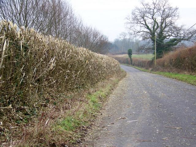 Hedge cutting near Cranborne