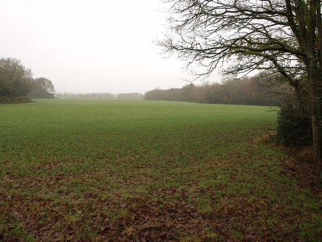 Field by Holme Lane