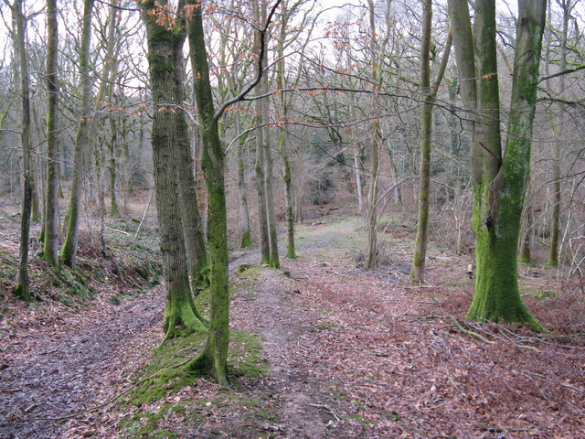 Climb out of Frith Wood to Frith Hill