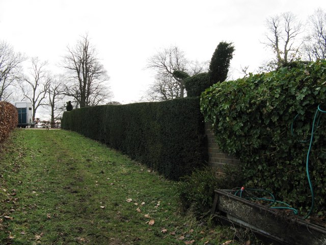 Topiary hedge at Frith Lodge