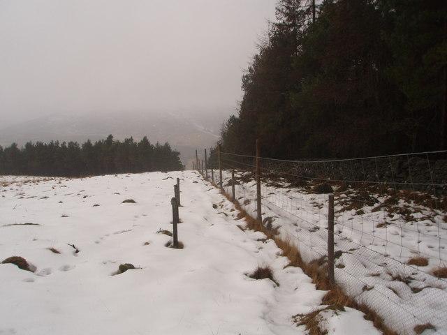 Deer fence heads for the mist of Glen Prosen