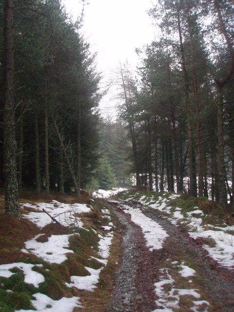 Track in Cotgibbon Plantation