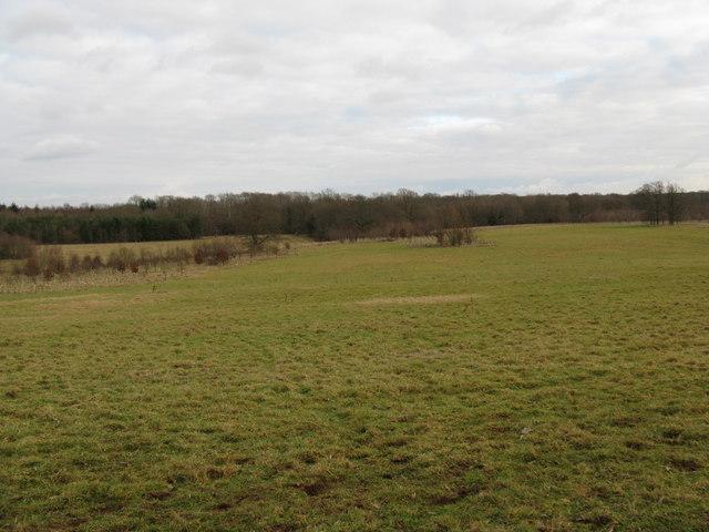 Former deer park at Shillinglee Park