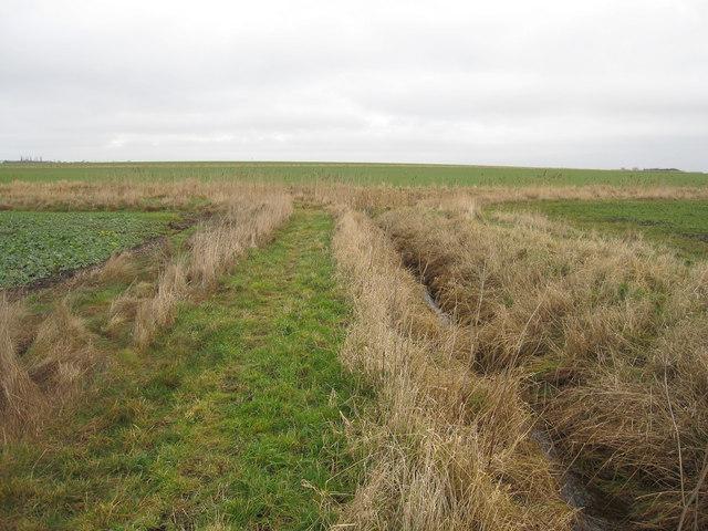 Path across Benson's Fen