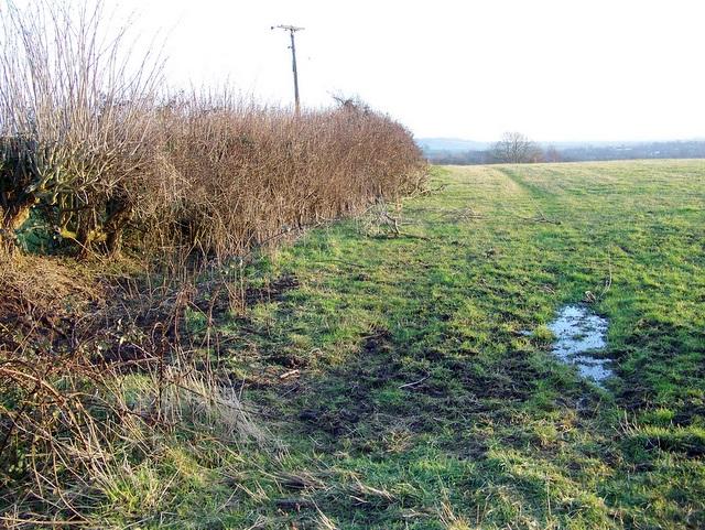 Hedge near Wells