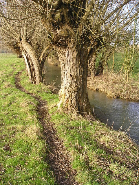 The Path by the Stream