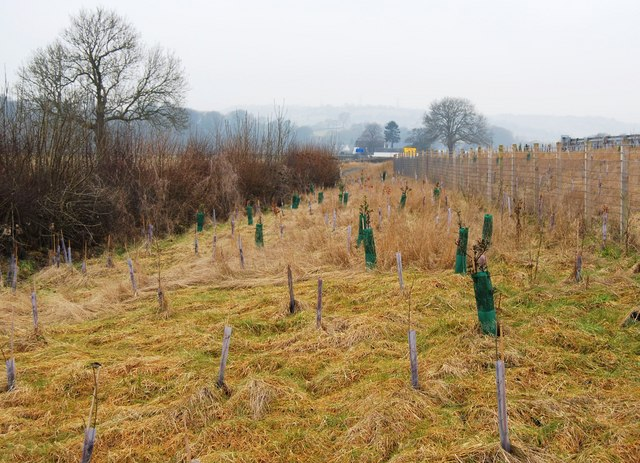 Trees planted on new roadside earthworks