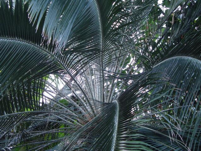 In the Palm House, Glasgow Botanic Garden