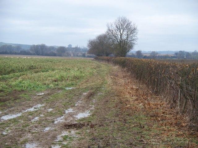 Long field [1]
