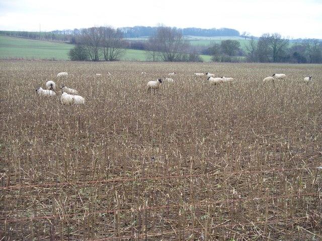 North Gloucestershire farmland