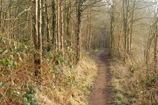 Public footpath through Nun Wood (1)