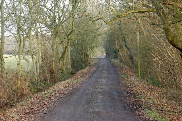 Track north of Nun Wood