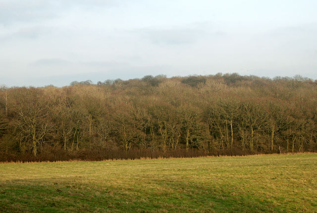 Looking north to Princethorpe Great wood