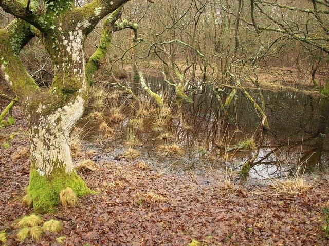 Flooded woodland, Furzebrook
