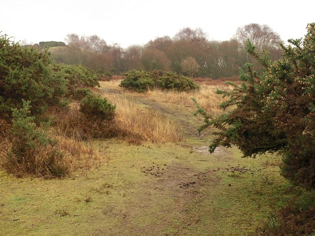 Path on Stoborough Heath