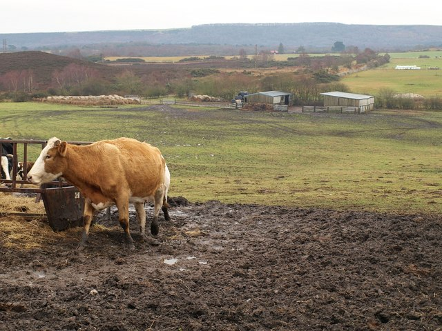 Farm buildings, Hartland Moor