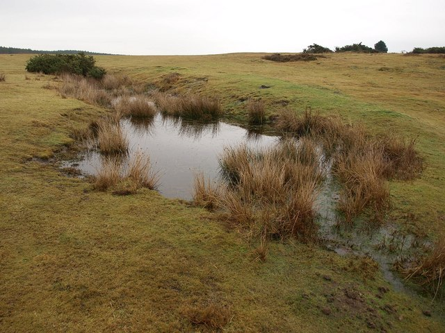 Pool on Slepe Heath
