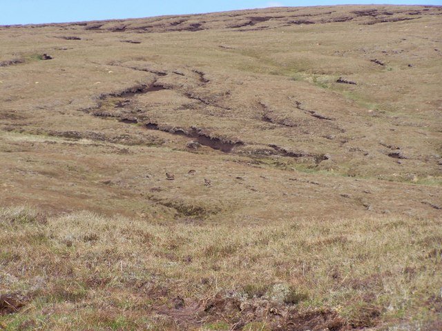 Red deer fleeing up the eastern peat hagged slopes of the Allt Meall na Teanga.