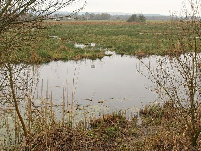 Wareham Meadows