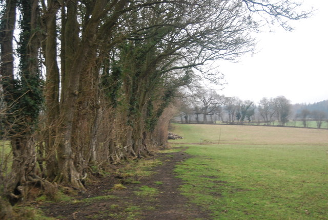 Footpath heading east along the hedge