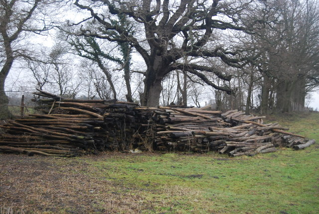 Timber pile by the footpath
