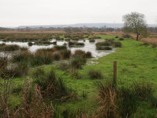 Flooded meadow near Wareham